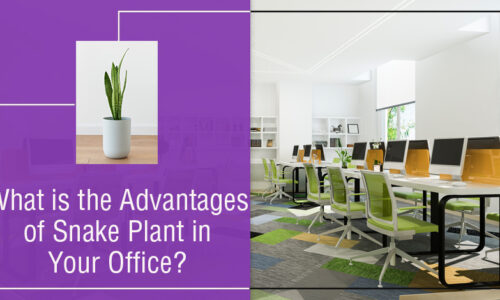 What are the advantages of Snake Plant in your Office